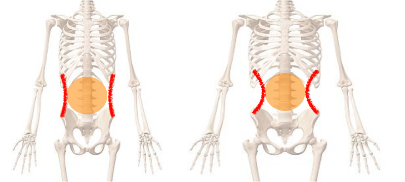 それが、くびれと骨格の関係性です。
